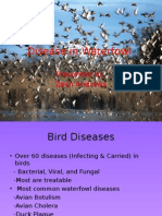disease in waterfowl wlf 314
