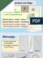 1, Organisasi Sel Alga