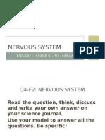 q4-f2 nervous system-modeling