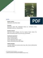 Muña_Vademecum.pdf
