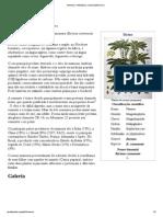 Mamona – Wikipédia, A Enciclopédia Livre