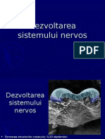 embriologie