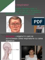 0 Sistem Respirator