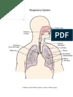 Anatomi Sistem Pernapsan