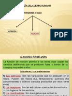 3º ESO - BIOLOGIA - Fisiologia de Cuerpo Humano