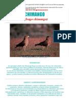 Milvago chimango - CHIMANGO