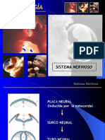 neuroembriología