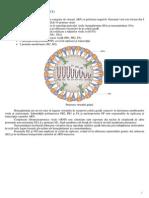 Virusul Gripal A_H1N1_de Origine Porcina
