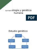 Embriología y Genética Humana estudio genetico