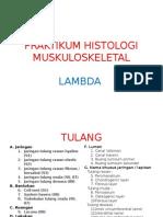 Praktikum Histologi Lambda