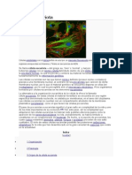 Célula eucariota