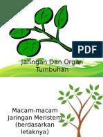 biologi11-jaringantumbuhan-120102192001-phpapp02.pptx
