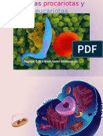 Organelos celulares mmikes