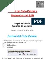 Control Del Ciclo Celular y Reparación Del ADN