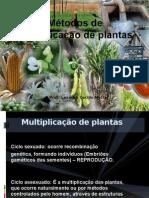 Métodos de Propagação de Espécies Frutíferas-Apresentação