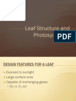 Section 12 Leaf Structure Photosynthesis