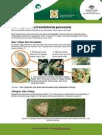 Cabbage Head Caterpillar Fact Sheetind 2010-09-14 Ulat Krop Kubis on 2-5-15