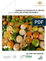 MANDARINA DE PUEBLA