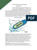 Bacterias Doc