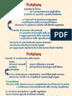 09_potatura