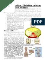 Reproducción y división celular