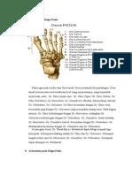 Anatomi Pedis
