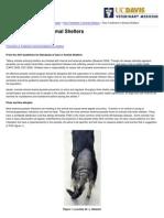 UC Davis Koret Shelter Medicine Program - Flea Treatment in Animal Shelters - 2013-10-09
