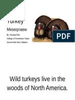 wild turkey informational book