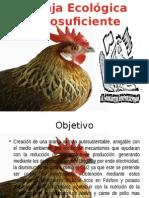 Granja Avicola Ecologica Autosuficiente