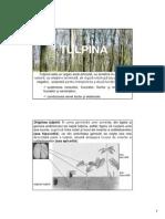 morfologia_anatomia plantelor_AH4_tulpina.pdf