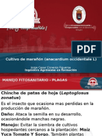 Plagas y Enfermedades Del Cultivo de Marañon.