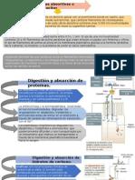 Histologia, absorcion de lipidos proteinas y cabohidratos