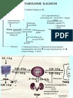 Metabolisme Kalsium