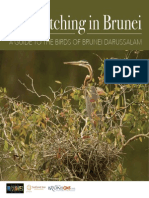 Birdwatching in Brunei