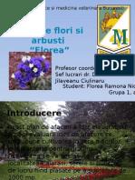 Sera de Flori Si Arbusti