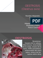 Oestrus Ovis