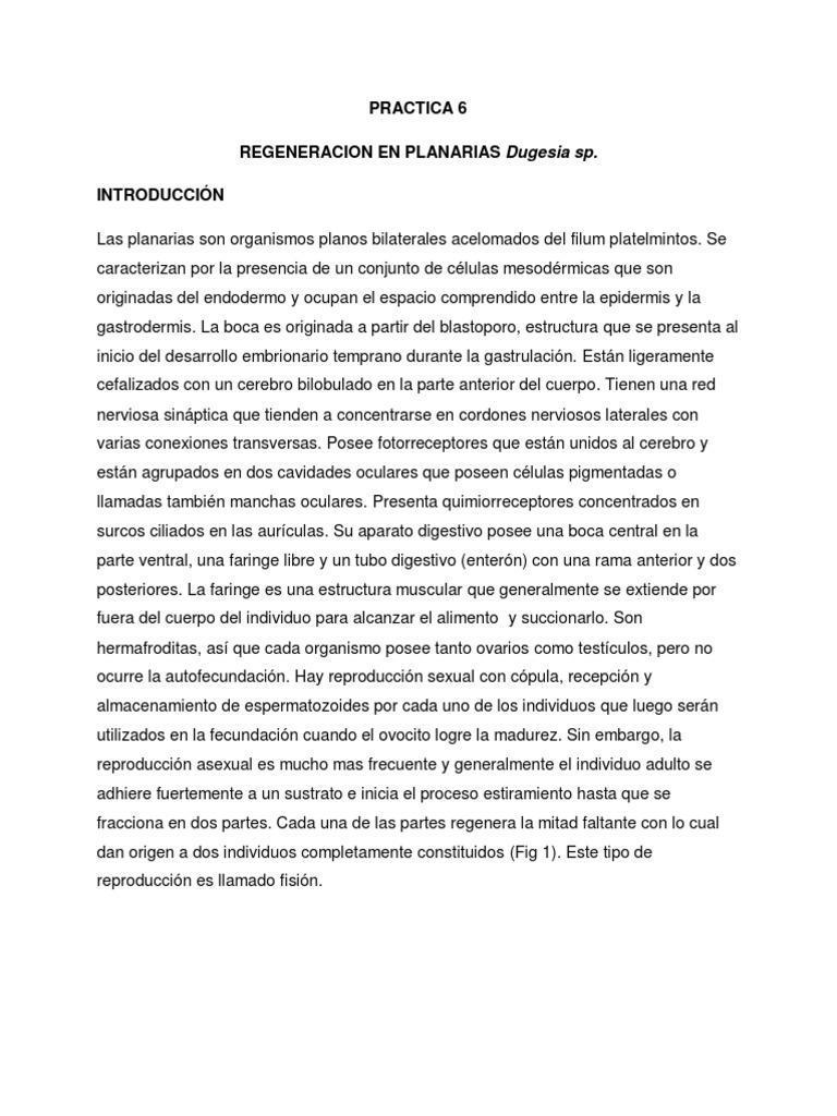PRACTICA 6. REGENERACION EN PLANARIAS.pdf
