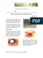 revista_kuru.pdf