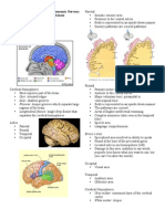 Brain and Special Senses
