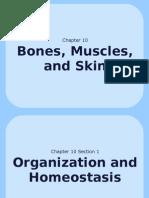 10-1 Organization and Homeostasis Web Version