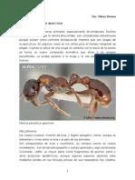 Insectos Orden Parasitica