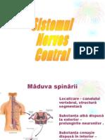 Fiziologie_Sistemul Nervos Central