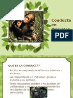 Conducta en Primates