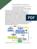 Requerimientos Nutricionales y Actividad Fisica c3