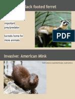 keystone & invasive species
