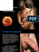 Fisiologia sexual1