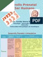 Etapas Del Desarrollo Intrauterino - Presentación