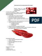 Definición y Descripción de Los Componentes de La Sangre