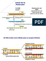 Replicacion Reparacion DNA