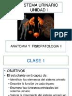 Clase 1 - Anatomia Sistema Urinario
